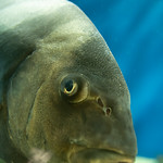 20210904 Hekinan Seaside Aquarium 9