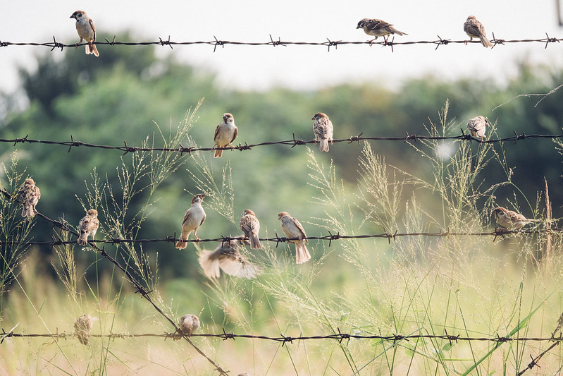 鳥鳥鳥鳥鳥鳥 Panasonic LUMIX GH5 II