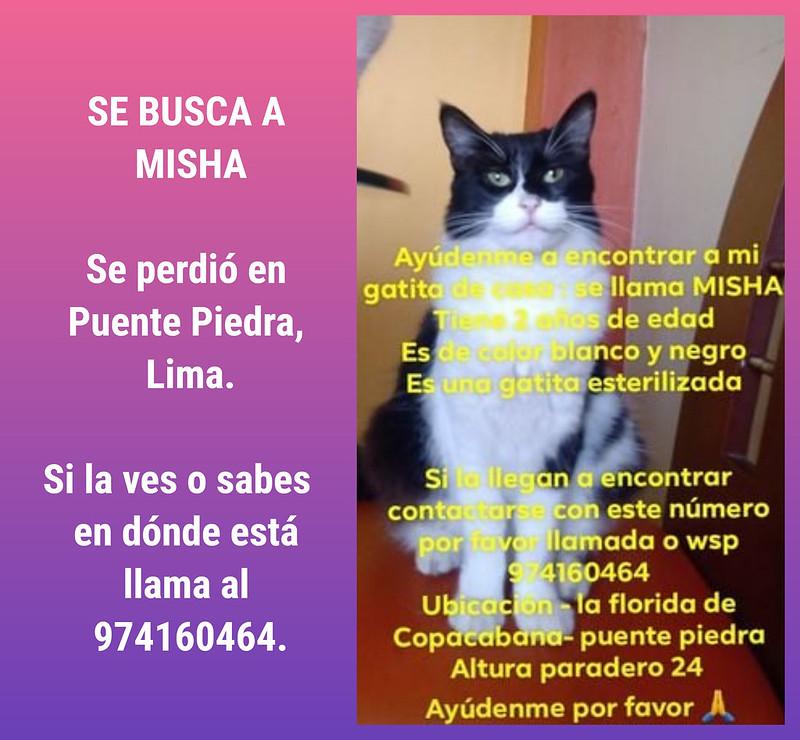 Se busca a Misha. Se perdió en Puente Piedra, Lima