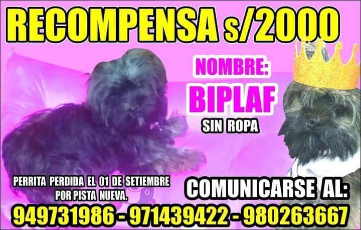 Se busca a Biplaf. Se perdió en SJM, Lima