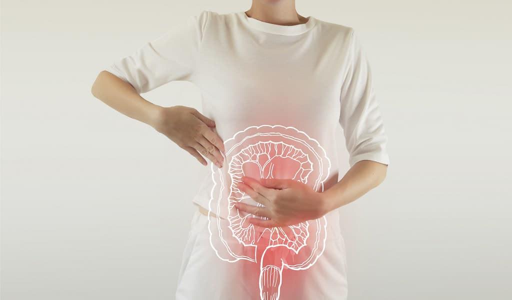 Un traitement potentiel contre l'inflammation intestinale