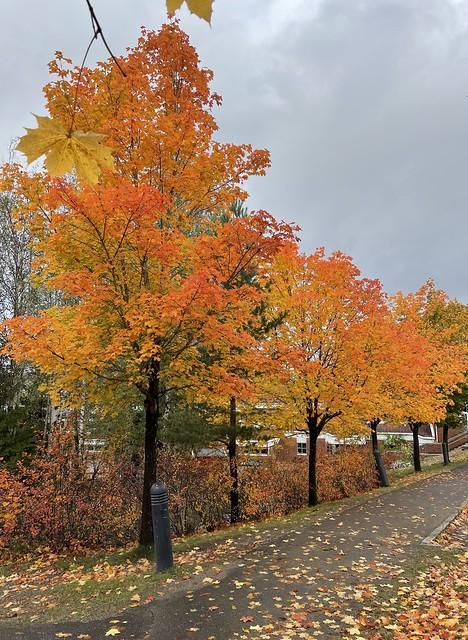 Autumn 🍂