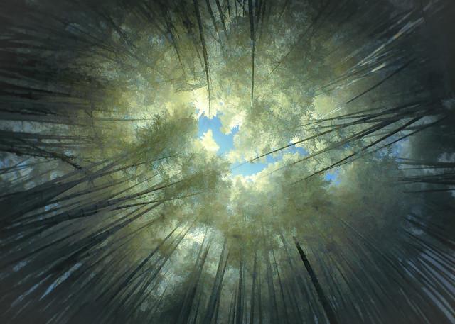 Bamboo Forest - IR