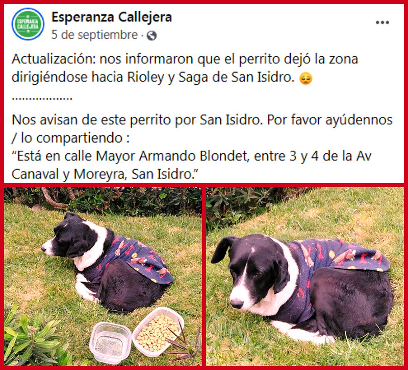 Perrito blanco con negro avistado en San Isidro y San Borja, Lima.