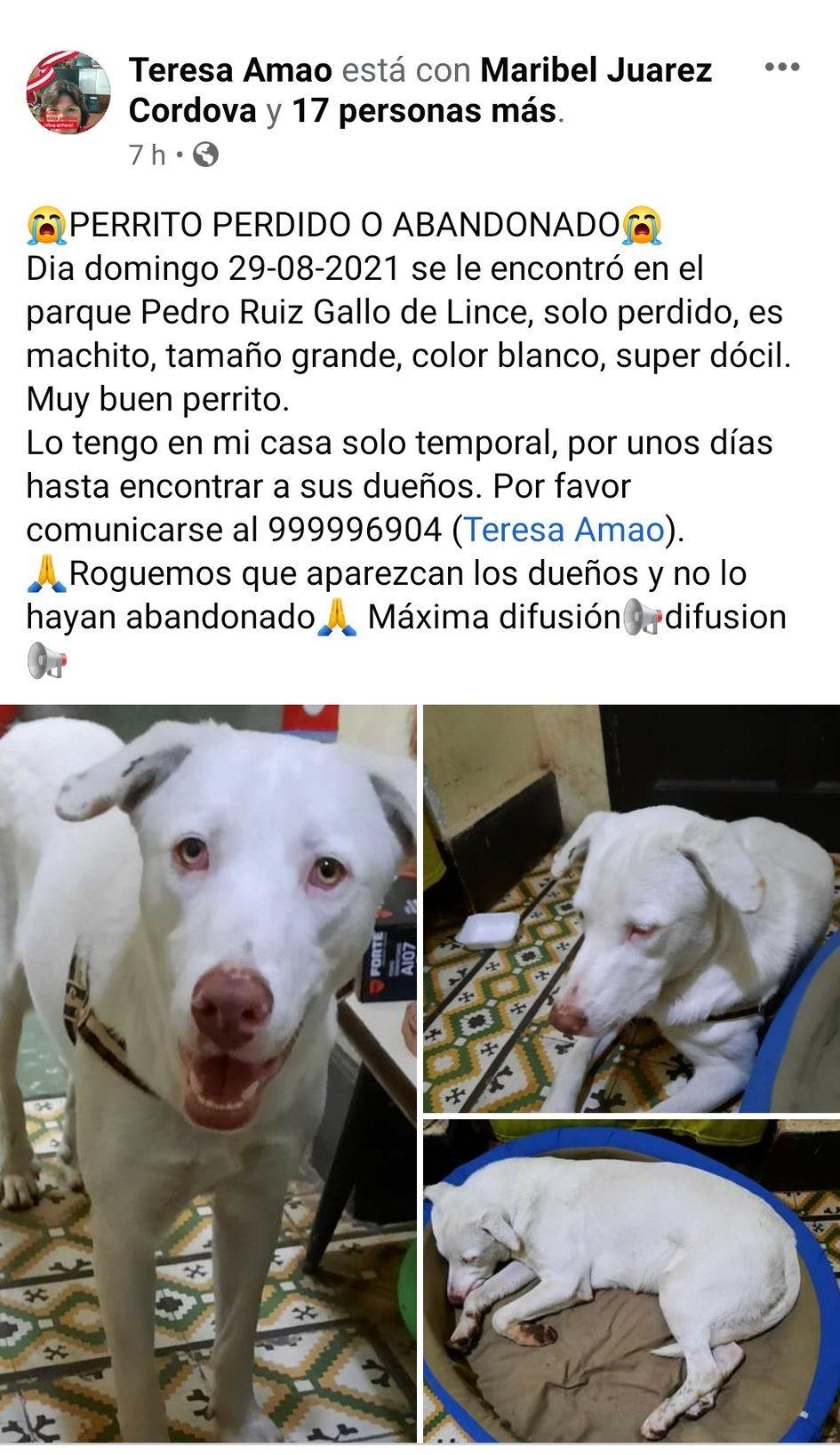 Perrito encontrado en el parque Pedro Ruiz Gallo, Lince, Lima