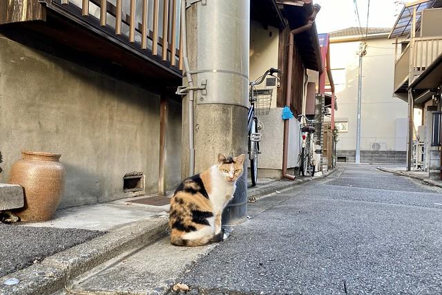 Today's Cat@2021−10−04
