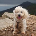 Bella beim Wandern auf Elba