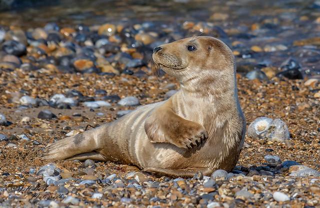 DSC7534  Common Seal..