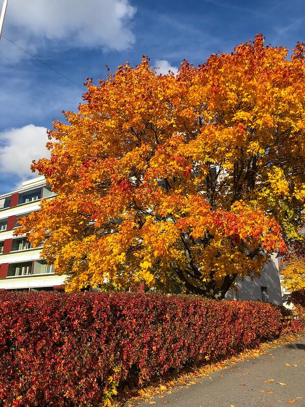 2021w39 Autumn colours