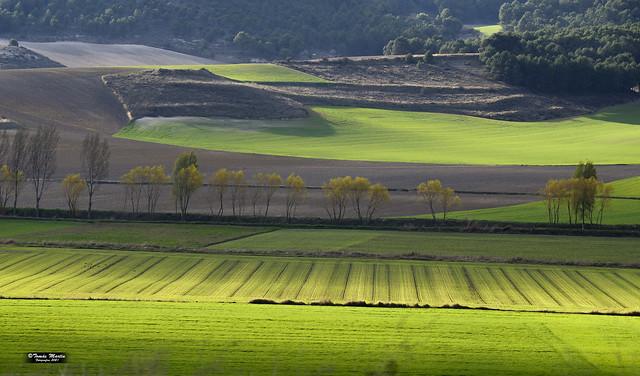 Vega del rio Esgueva en Valladolid.2ED