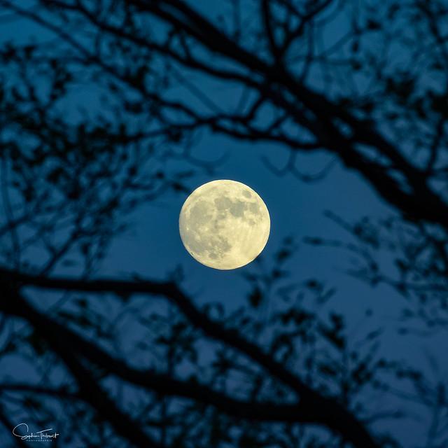 Lever de lune - Moonrise (EXPLORE)
