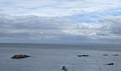 Seals at Seafield Kirkcaldy