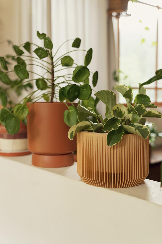 07-peperomia-pilea-marble-houseplants-planttour