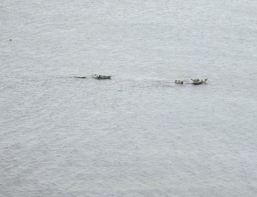Seals Perched on Rocks near Kirkcaldy