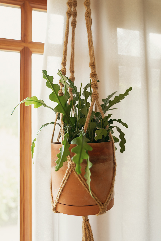 04-ricraccactus-fishbonecactus-houseplants-planttour