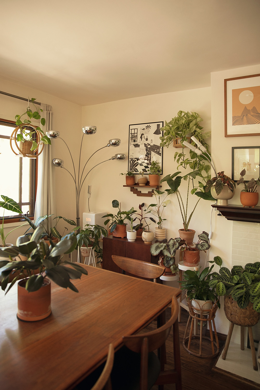 02-homedecor-houseplants-planttour