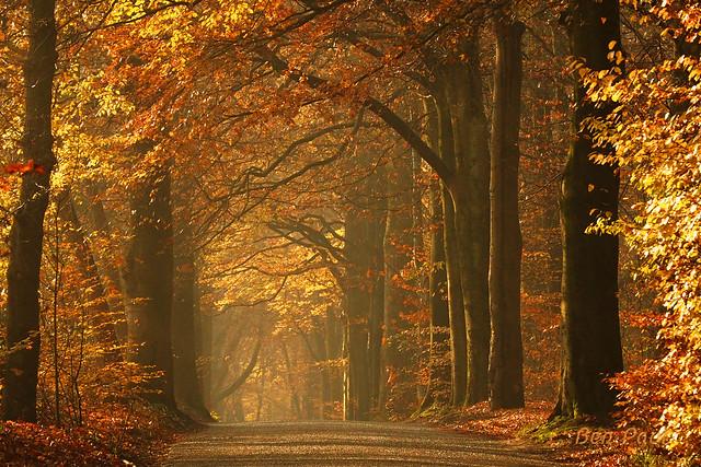 Ben Paul F0937 Autumn wood 2020