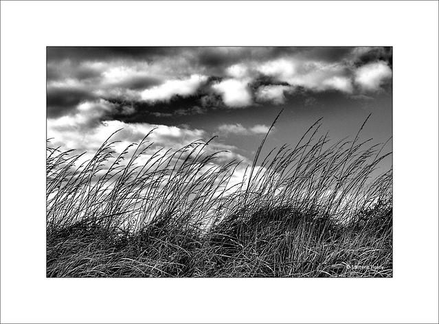 Entendez-vous le vent souffler sur les herbes folles ?