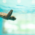 20210904 Hekinan Seaside Aquarium 10