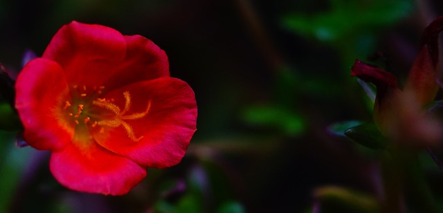 original color from vintage lens without retouch