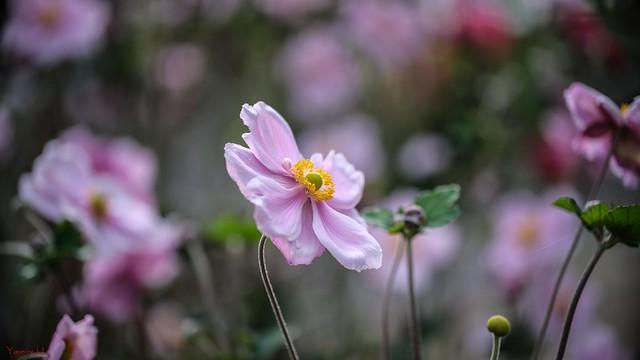 10225 - Flowers