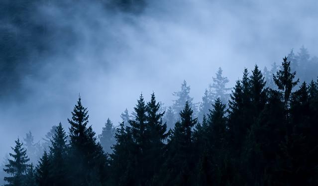 Black Forest Evening