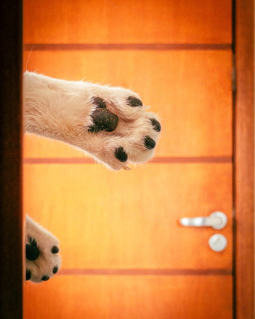 Paws of my pals