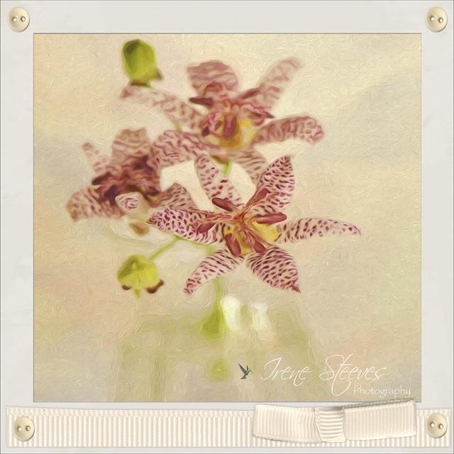 Toad Lilies Still Life