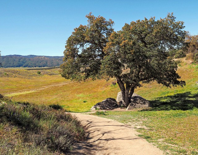 A restful spot along the Pacific Crest Trail...