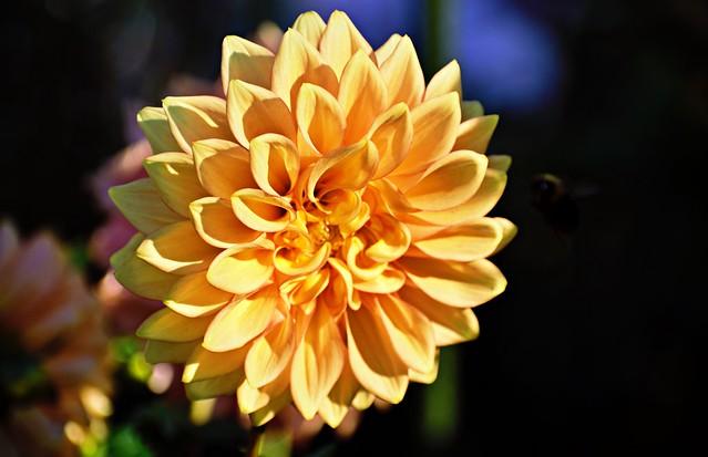 Focused on Flowers #7
