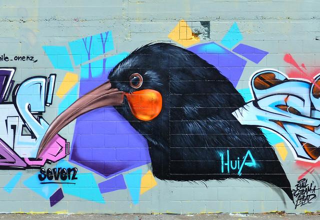 The Huia. NZ Bird.