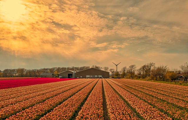 A farm tending its garden.