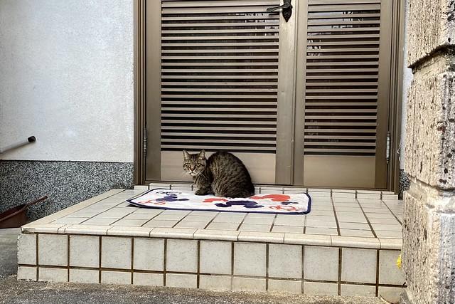 Today's Cat@2021−10−06