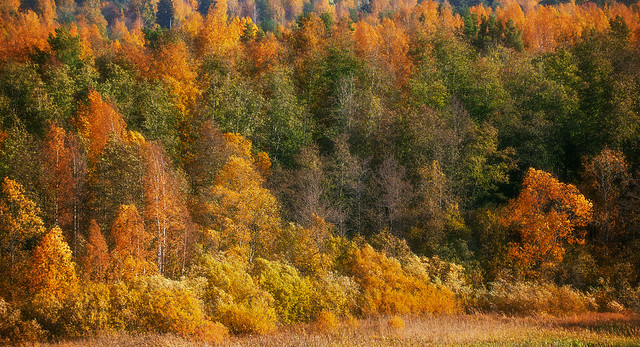 Beautiful Fall Forest