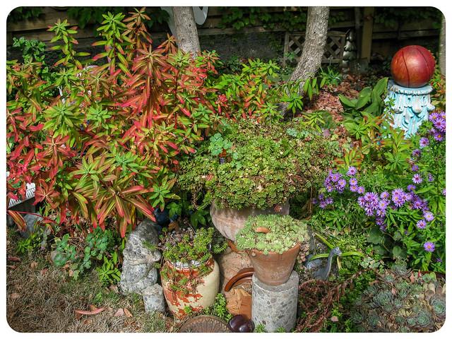 Euphorbia Autumn Glow