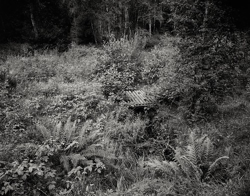 Steg im Wald bei Holmseryd. Fotografie im Großformat 4x5.