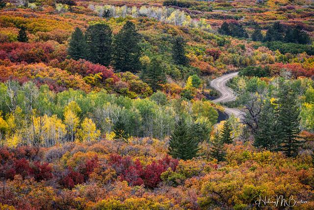 Autumn Road.....