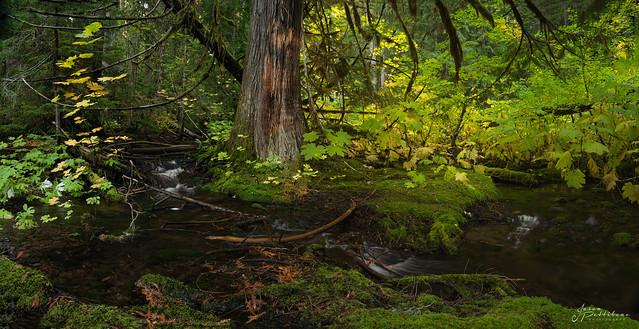 Proxy Creek - Fall 2021