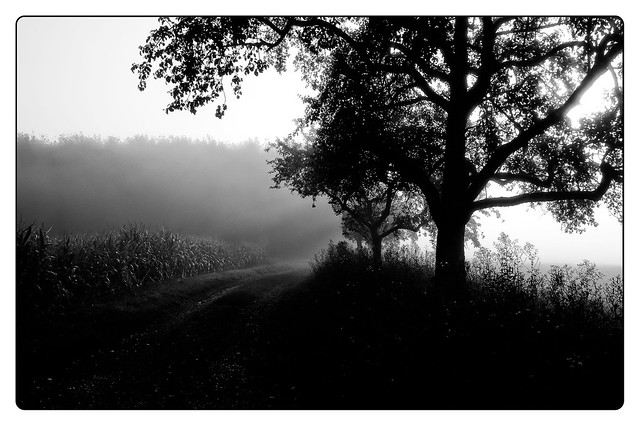 Autumn Time # 30