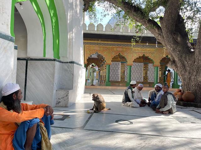 Mission Delhi - Unnamed Monkey, Hazrat Chirag Dehlavi's Sufi ShrineG_9507