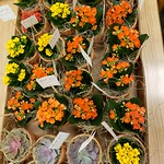 ZSR Wellness and Sustainability Committee-Plant Surprise for ZSR Faculty and Staff