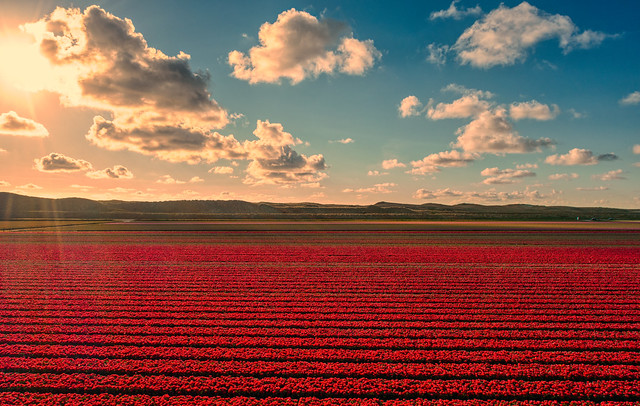 Clouds, Dunes, and Tulips.