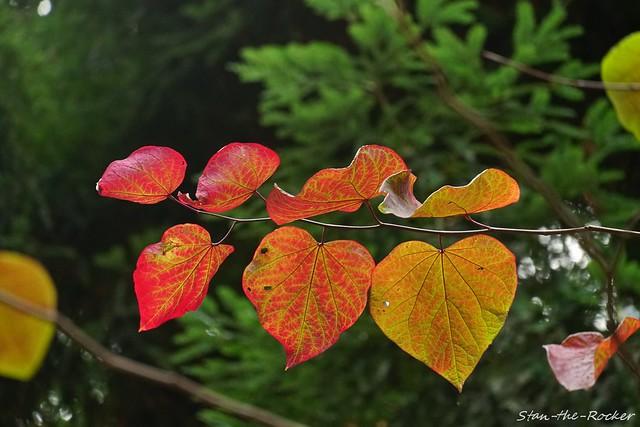 Transamerica Redwood Park - 100621 - 12