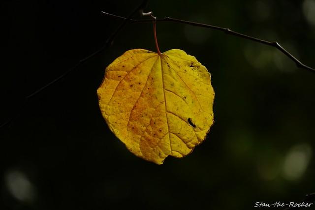 Transamerica Redwood Park - 100621 - 04