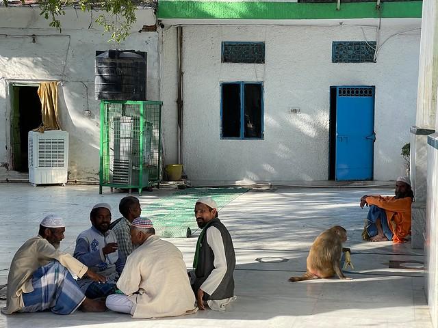 Mission Delhi - Unnamed Monkey, Hazrat Chirag Dehlavi's Sufi Shrine