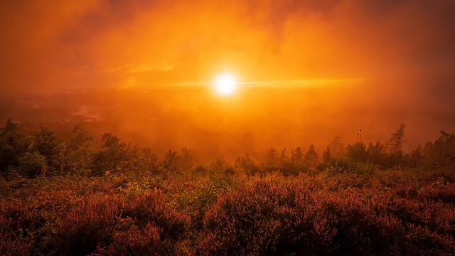 Orange glow during a sunset in the Black Forest