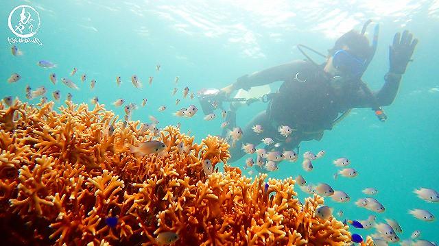 サンゴと俺。