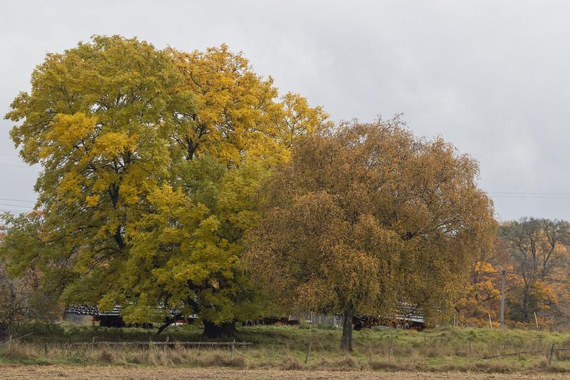 Autumn at Nedersta