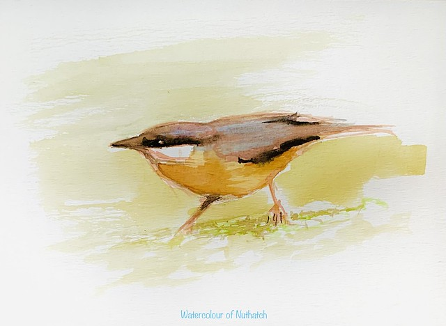 Brush only watercolour sketch of Nuthatch, by jmsw on stretched paper