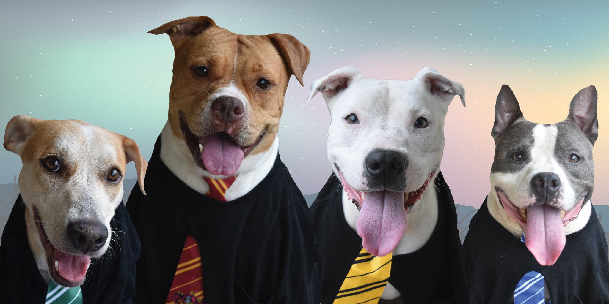 Harry Potter Adoption event